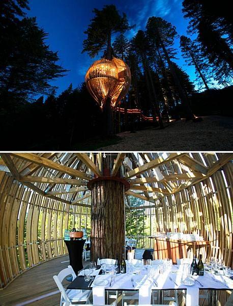 رستوران درختی Redwoods در وارکورت زلاند نو