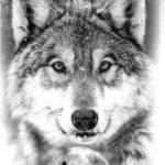 عکس گرگ وحشی نقاشی سیاه قلم