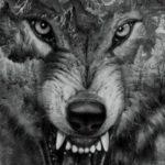 عکس گرگ وحشی نقاشی سیاه و سفید