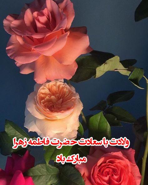 عکس پروفایل تولد حضرت زهرا
