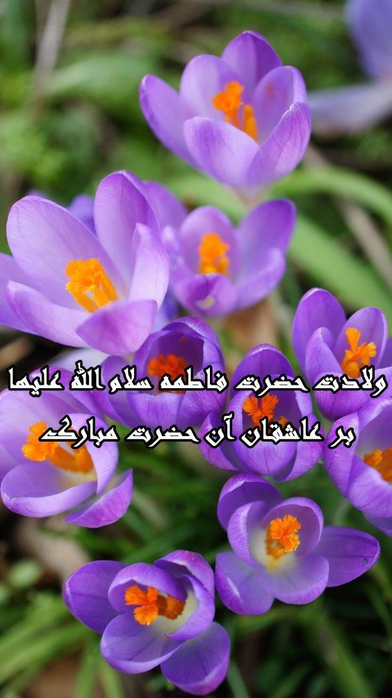 عکس نوشته جدید تبریک ولادت حضرت زهرا