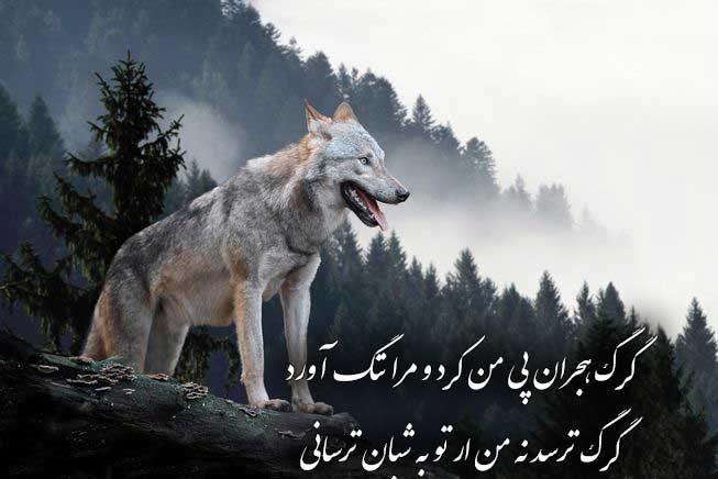 عکس نوشته گرگ با متن زیبا برای پروفایل