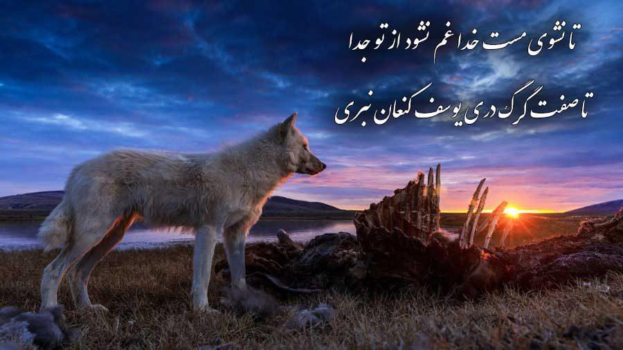 زیباترین عکس نوشته گرگ با کیفیت عالی