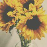 پس زمینه گل آفتابگردان برای گوشی