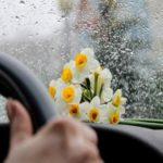 عکس گل نرگس در باران