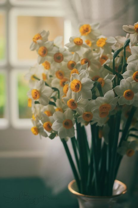 عکس دسته گل نرگس زیبا