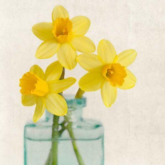 عکس گل نرگس برای نقاشی