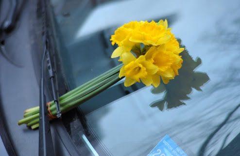 عکس گل نرگس در ماشین
