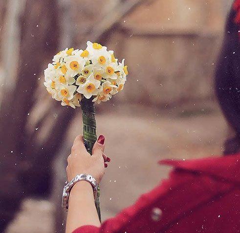 عکس گل نرگس در دست دختر