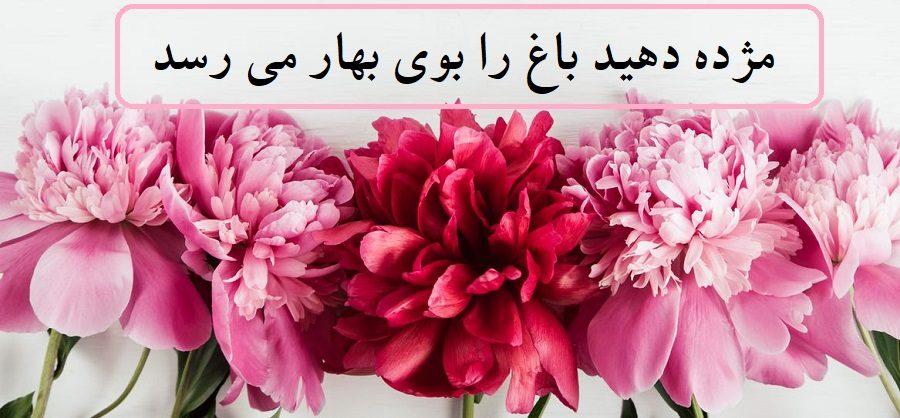 عکس پروفایل ویژه عید نوروز