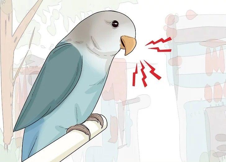صدای مرغ عشق زیاد است