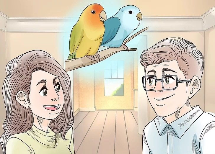 مشورت قبل از گرفتن مرغ عشق