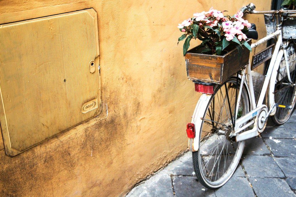 دوچرخه و گل