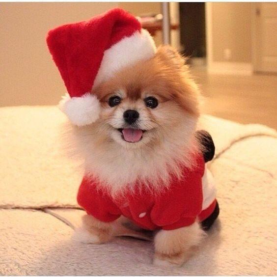 عکس سگ خوشگل والپیپر گوشی