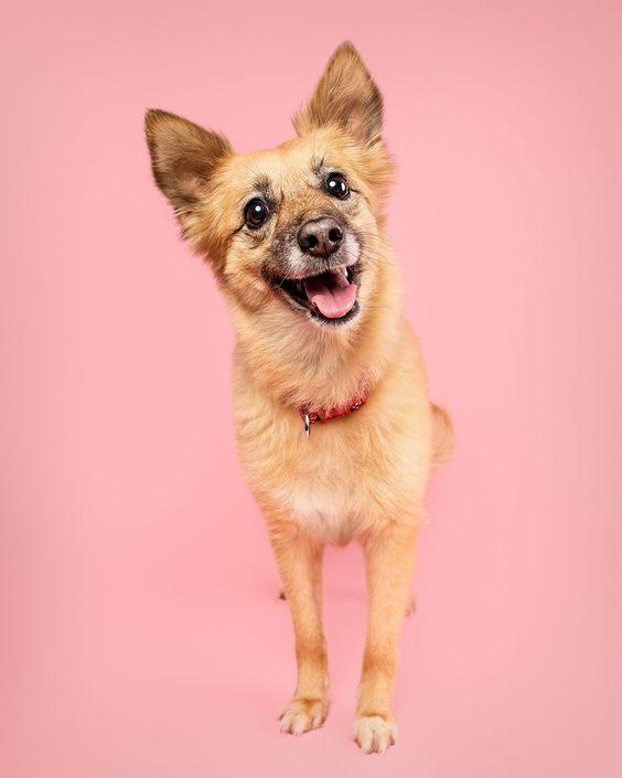 عکس پس زمینه موبایل سگ های زیبا و بامزه