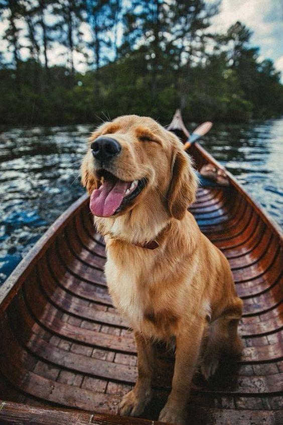 والپیپر های زیبا از سگ