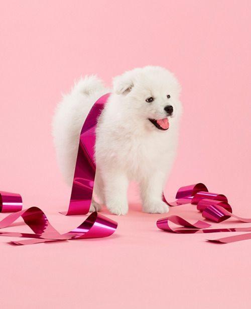 والپیپر سگ های بامزه و زیبا