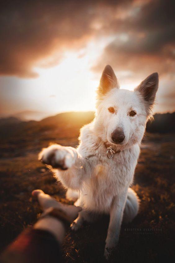 تصویر زمینه سگ پشمالو