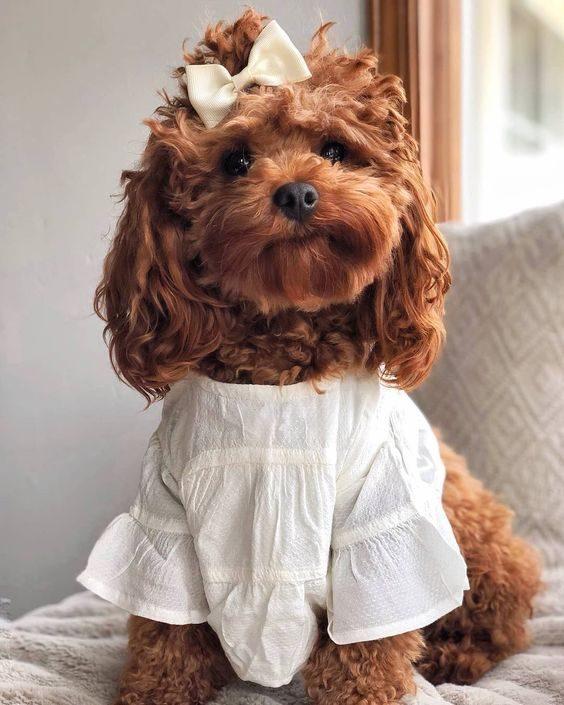 عکس سگ خوشگل برای پس زمینه گوشی