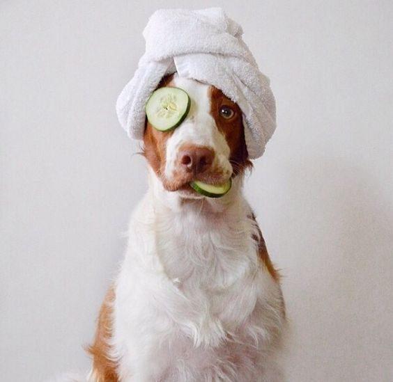 عکس پس زمینه موبایل سگ های زیبا
