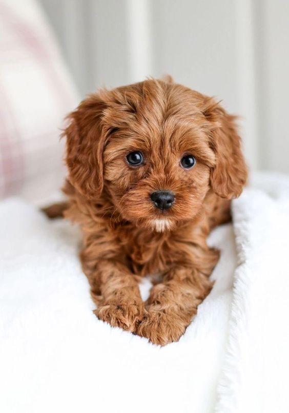 عکس سگ خوشگل برای گوشی