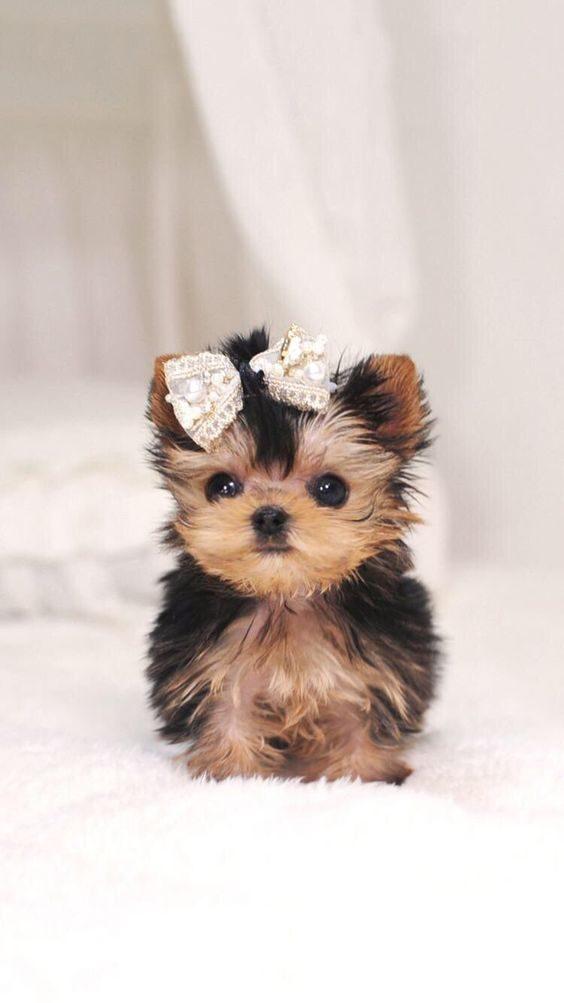 عکس سگ خوشگل و ریز برای پس زمینه گوشی
