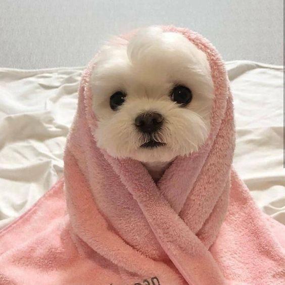 عکس توله سگ خوشگل برای بک گراند گوشی