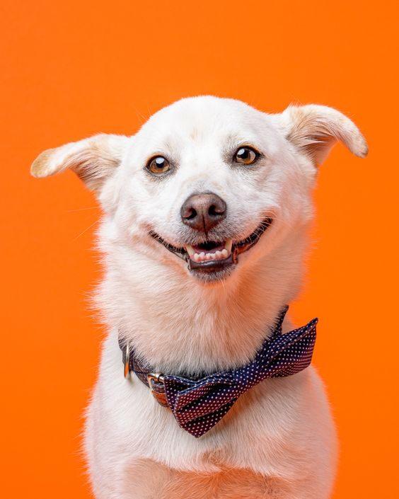 عکس پشت زمینه گوشی از سگ های بامزه