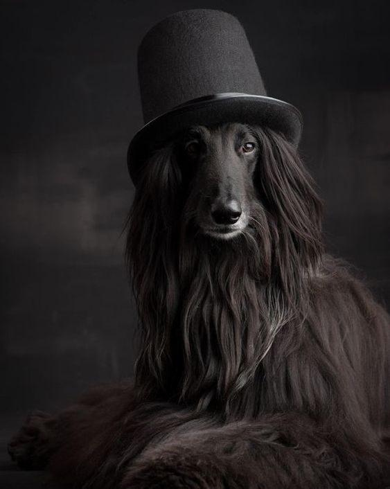 والپیپر سگ فانتزی