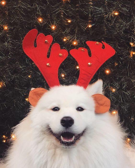 عکس سگ سفید برای بک گراند گوشی