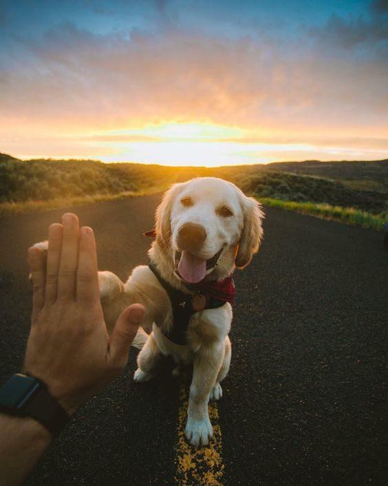 عکس پشت زمینه گوشی از سگ های زیبا