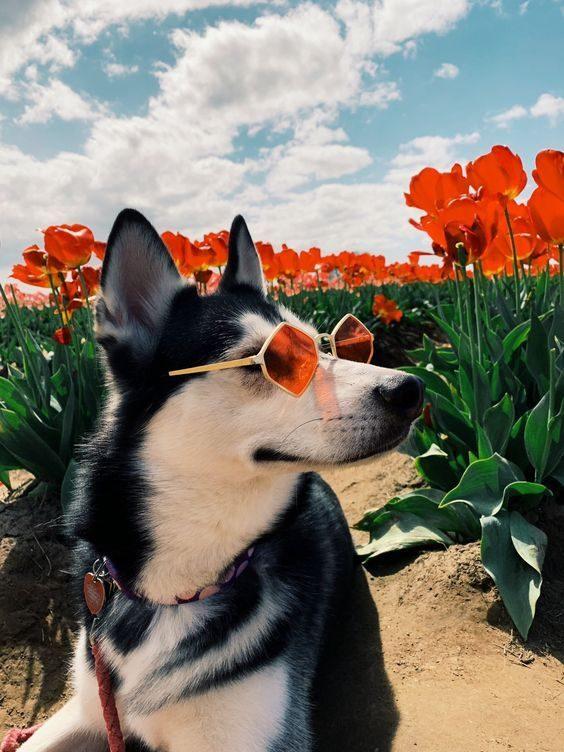 عکس پشت زمینه گوشی از سگ