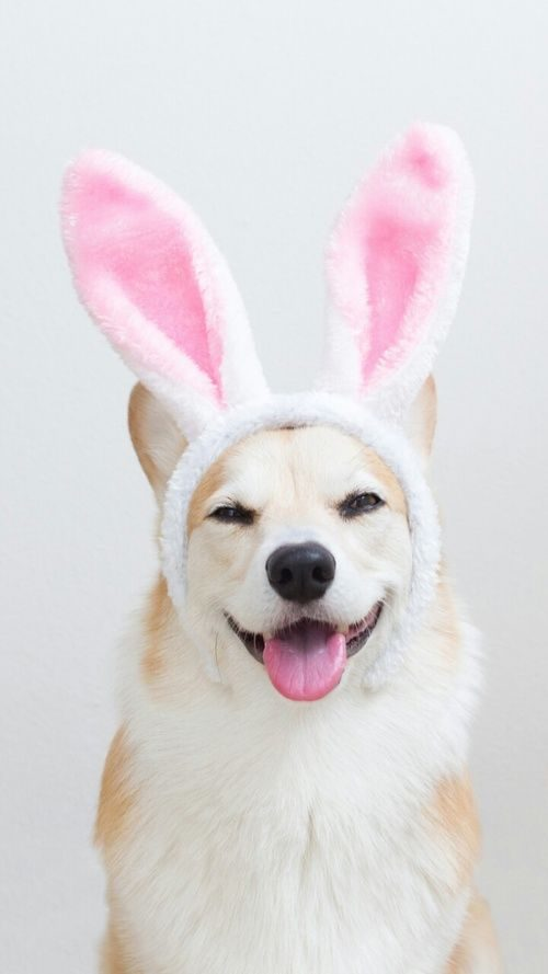 والپیپر سگ های بامزه