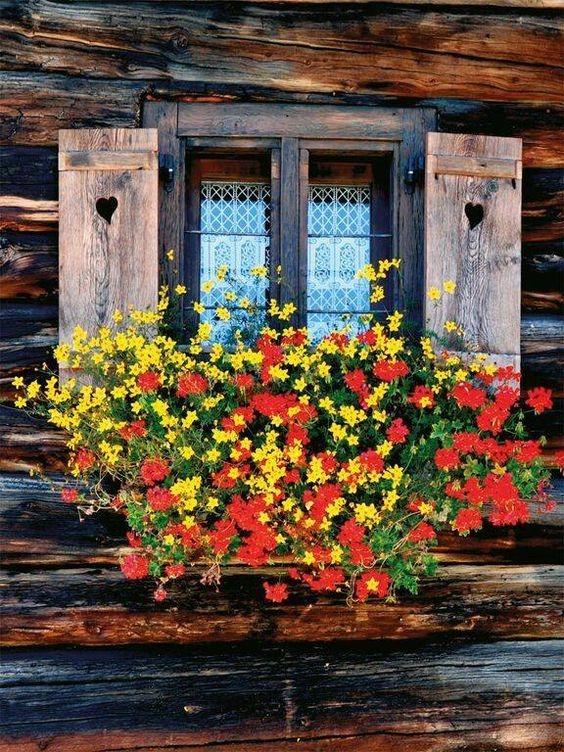 عکس گلدان کنار پنجره