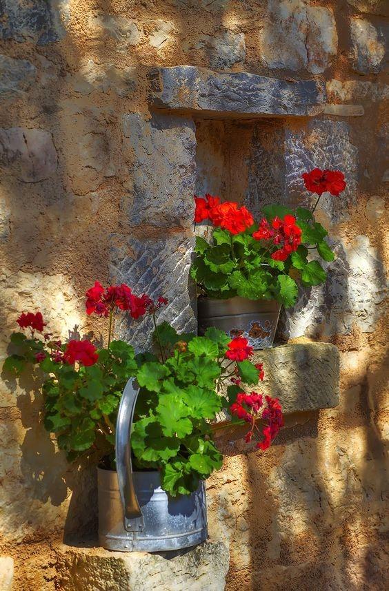 دانلود عکس های زیبا از گلدان لب پنجره