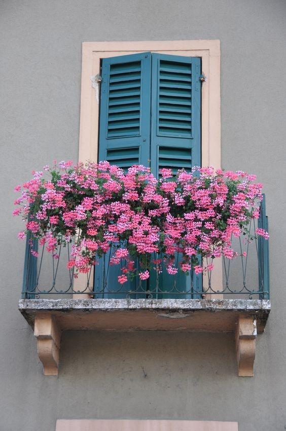 عکس خاص و زیبا از گلدان کنار پنجره