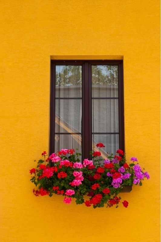 عکس گلدان کنار پنجره برای پروفایل