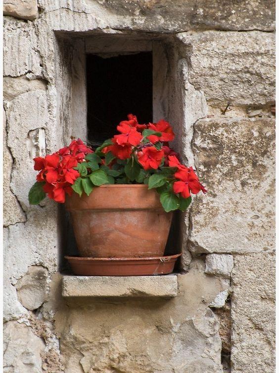 گلدون با گل قرمز لب پنجره
