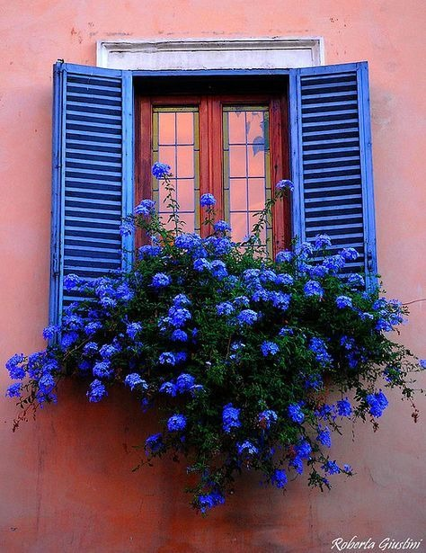 گلدان خوشگل لب پنجره