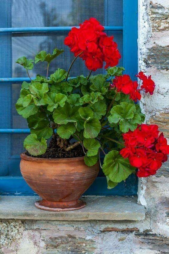 دانلود عکس های زیبا از گلدان لب پنجره برای پروفایل