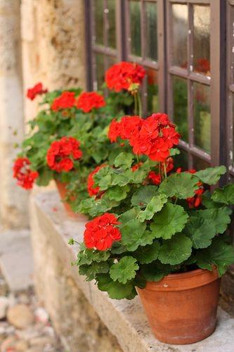 گلدان زیبا کنار پنجره
