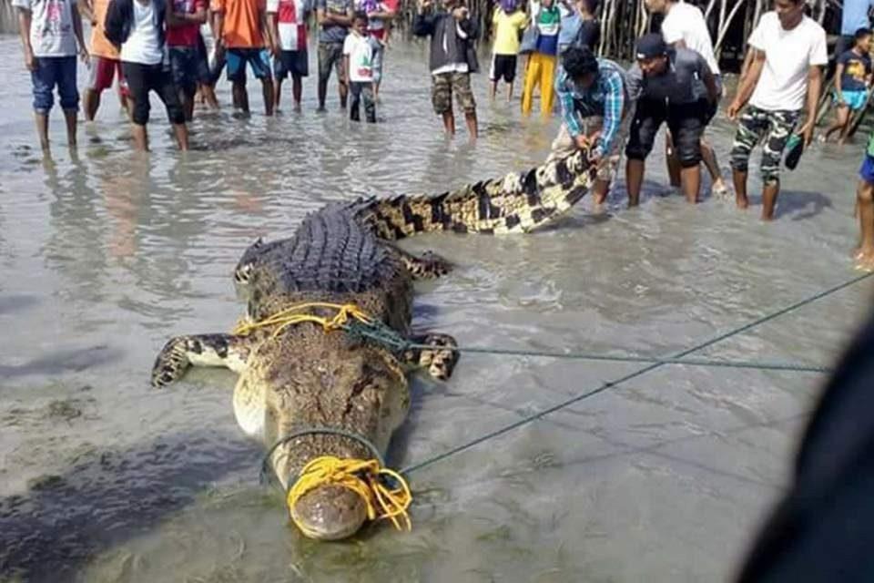 تمساح Tawi-Tawi بزرگترین تمساح جهان