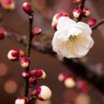 عکس پروفایل شکوفه ها