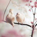 عکس شکوفه بهاری زیبا با پرنده