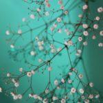 عکس پروفایل شکوفه درختان