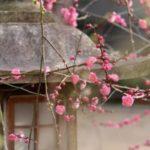 عکس پروفایل شکوفه بهار