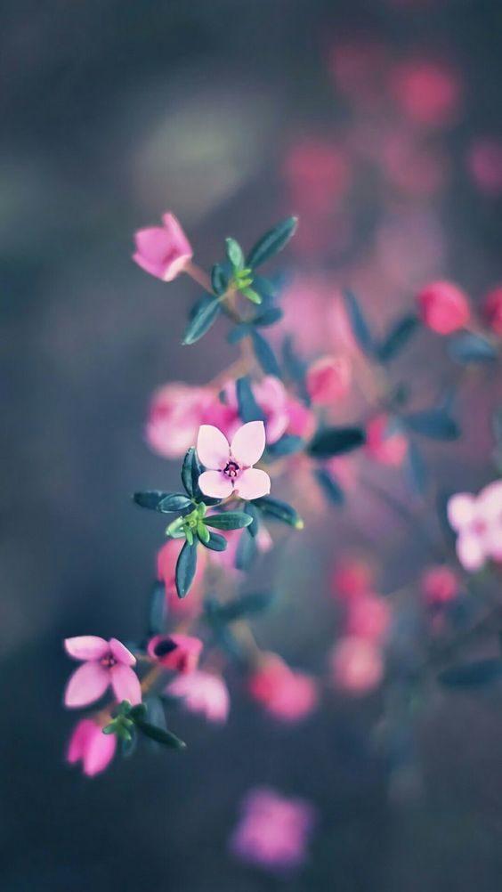عکس شکوفه زیبای بهاری برای پروفایل