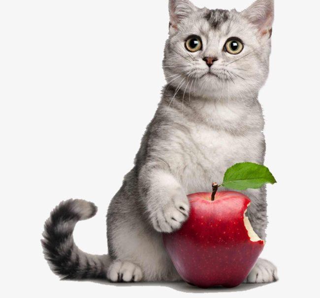 سیب میوه ای برای گربه