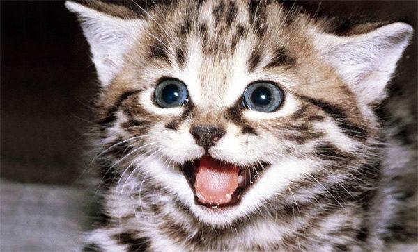 خندیدن گربه ها