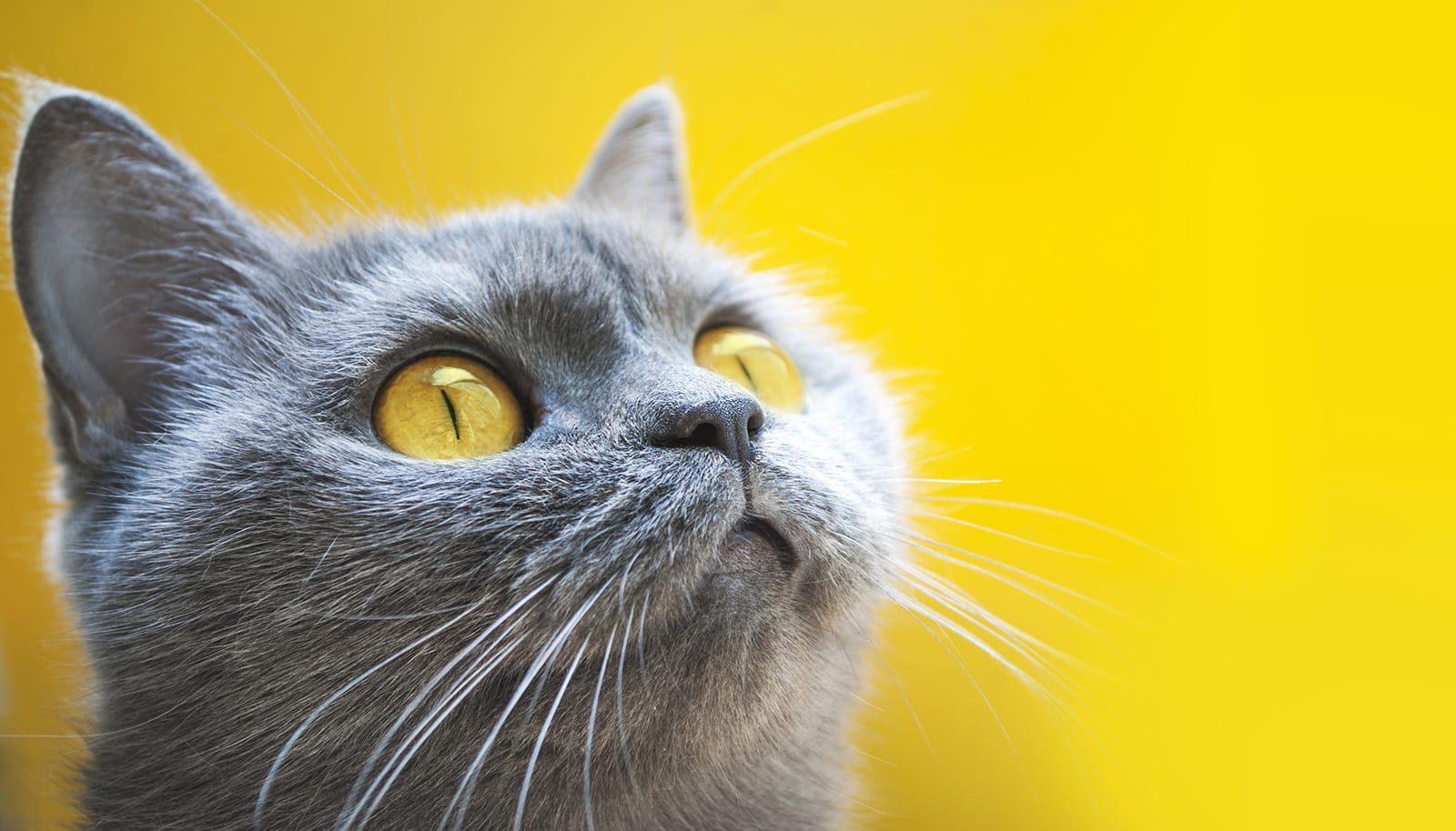 رنگی که گربه ها دوست دارند
